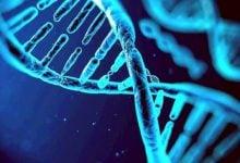 Photo of ژنها در پیشبینی بیماریها نقشی ندارند