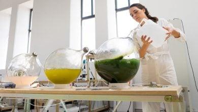Photo of تولید دانههای بیوپلاستیکی خام با میکروجلبک