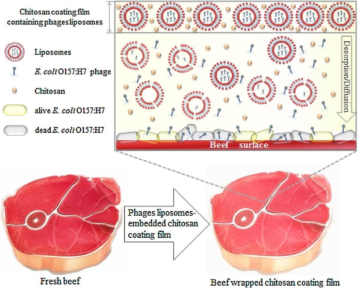 فرآیند ضد باکتریایی فیلم کیتوسان حاوی لیپوزوم
