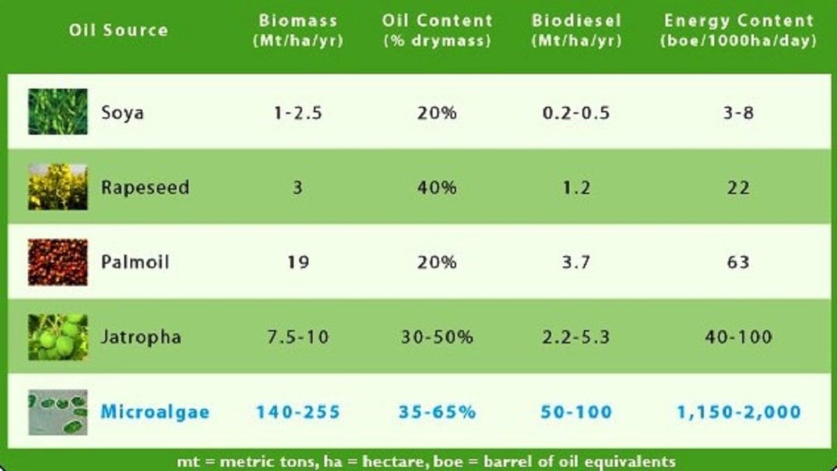 مقایسه جلبک با سایر دانهها