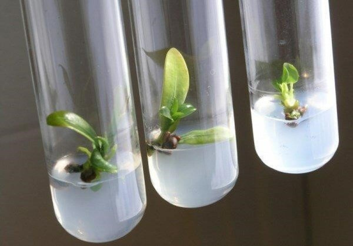 استفاده از جلبک برای رشد گیاهان