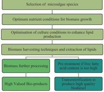 شکل 1: فرایند معمول تولید بیودیزل