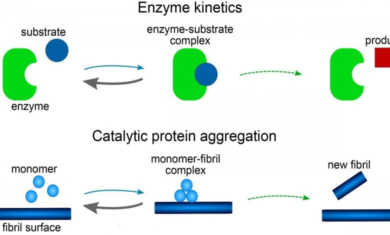 توسعه یک مدل ریاضی برای بررسی عامل تشکیل آلزایمر