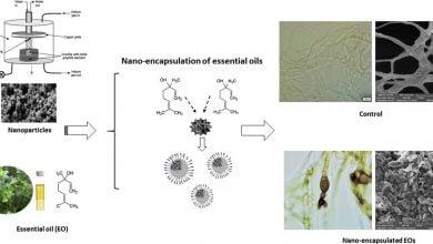Photo of پیوند نانوذرات نقره با اسانس گیاهان دارویی برای کنترل بیماریهای گیاهی