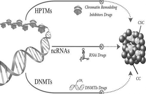درمان های اپی ژنتیکی برای سرطان