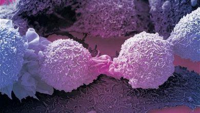 Photo of درمان سرطان به کمک نوع جدیدی از لنفوسیت های T