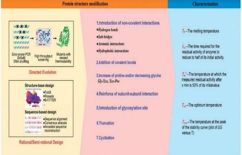 بررسی تغییرات ساختار پروتئین حاصل از مهندسی پروتئین برای بهبود پایداری حرارتی پروتیئن
