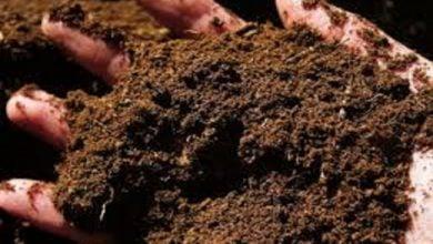 Photo of خاک جادویی راهحلی سبز برای جریان قرمز جلبک
