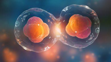 Photo of بازسازی رگ های خونی شبکیه چشم به کمک سلول های بنیادی