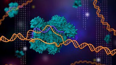 Photo of افزایش دقت تصحیح ژنوم با نسل جدید کریسپر