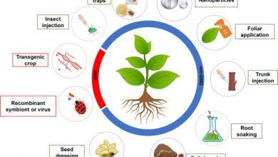 Photo of کاربردهای RNAi در گیاهان