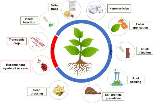 بهرهوری RNA مداخلهگر و روشهای جدید انتقال آن برای کنترل حشرات آفات