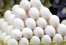 Photo of تولید جاذب با استفاده از پر مرغ و پوسته تخم مرغ
