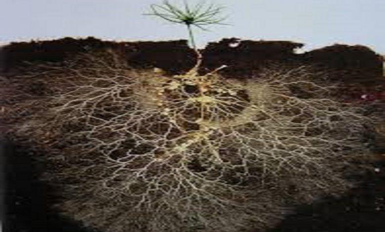 کاهش ارتباط گیاه و میکروارگانیسم ها توسط مواد آلی