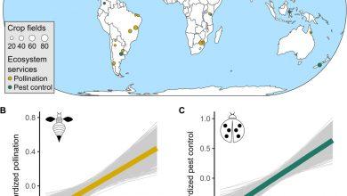 Photo of کاهش تنوع زیستی در اکوسیستم و تاثیر آن بر عملکرد گیاهان