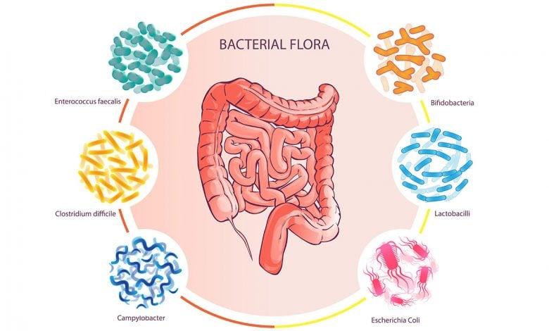 تأثیر شگرف تغذیه و رژیم غذایی بر میکروبیوم روده