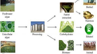 Photo of تولید محصولات غیر سوختی از میکروجلبک ها