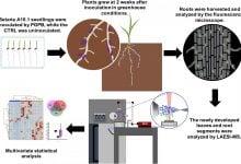 Photo of تثبیت بیولوژیکی نیتروژن راهی برای کاهش مصرف کودهای نیتروژنی