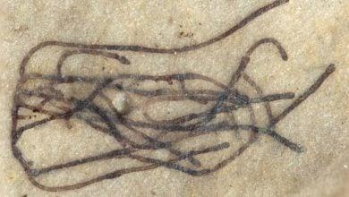 Photo of کشف ریزجلبک یک میلیارد ساله