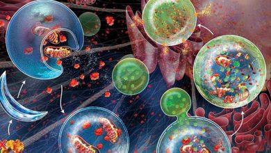 Photo of بررسی نقش آنزیم پروتئولیتیک در تبدیل پروتئین های میکروبی