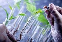 Photo of تولید متابولیت های ثانویه گیاهی از کشتهای سلولی