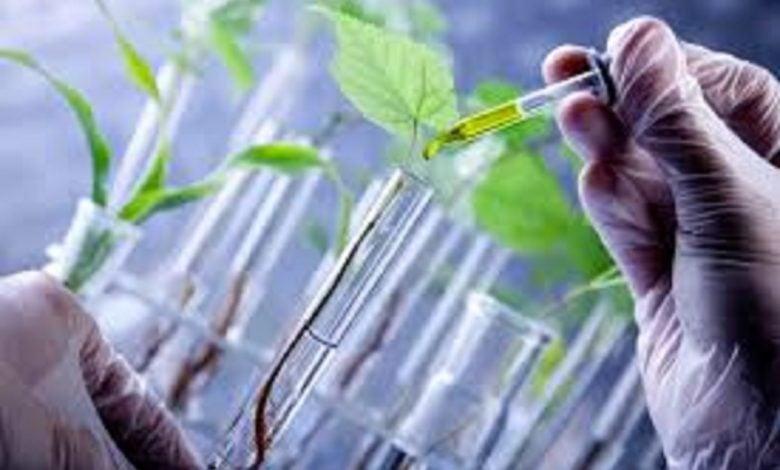 تولید متابولیت ثانویه گیاه