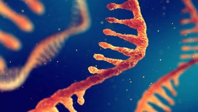 Photo of اهمیت انعطافپذیری تکاملی RNAهای بلند غیررمزگذار