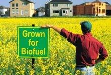 Photo of امید فزاینده صنعت دیزل زیستی امریکا علیرغم وجود کووید-19