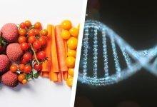 Photo of رژیم غذایی با تست DNA