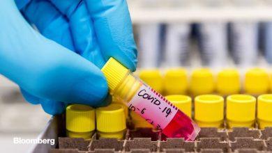 Photo of تولید آنتی بادی علیه کروناویروس در آزمایشگاه