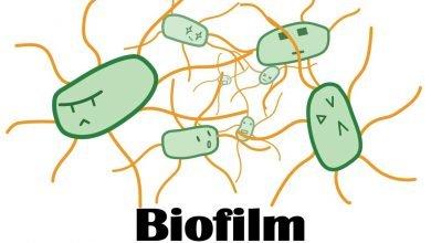 Photo of بررسی نقش پالمیتیک اسید در زیست لایه
