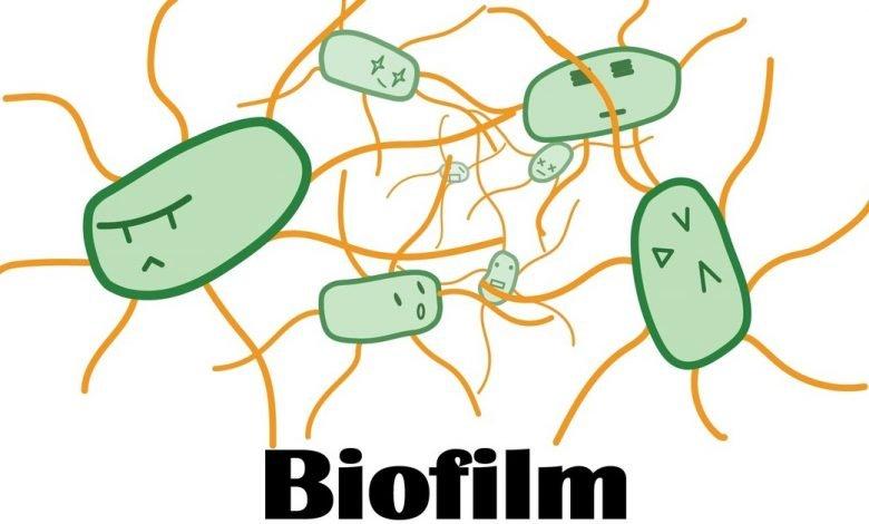 بررسی نقش پالمیتیک اسید در زیست لایه