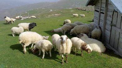 Photo of تولید برق و انرژی زیستی از زبالههای حیوانات و پسماندهای کشاورزی در ایران