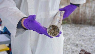 Photo of تأثیر جوامع میکروبی خاک و ریشه گیاه بر اختلال Nicotiana tabacum
