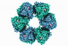 Photo of مقابله با ویروس ها به کمک خون لاما و ابرچسب مولکولی