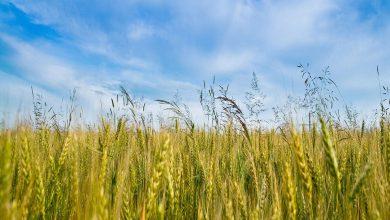 Photo of کنترل آفات و حشرات با کشاورزی ارگانیک