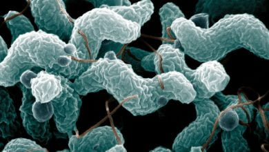 Photo of بررسی ویژگی های کووید-19 در درمان میکروبی عفونت های SARS-CoV-2