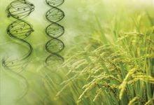 Photo of بررسی نقش ژنوم جلبک بر گیاهان