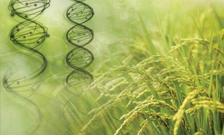 بررسی نقش ژنوم جلبک بر گیاهان