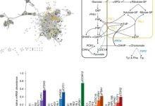 Photo of ترکیب مدلهای مکانیستیک و مدلهای مبتنی بر یادگیری ماشین