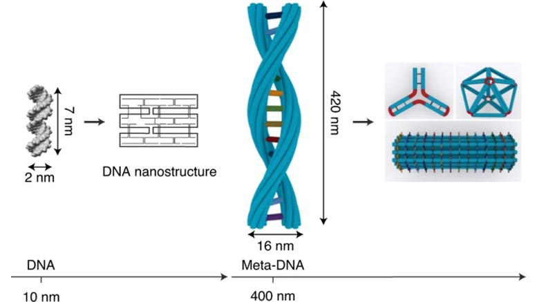 با انتخاب دقیق مجموعهای از توالیهای DNA، محققین میتوانند رشتههای DNA را خم یا تا کرده و اشکال با آرایش پیچیدهای را در ابعاد نانو بسازند.