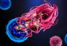 Photo of کشف سلول های ایمنی جدید