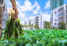 Photo of آینده صنعت غذا و کشاورزی