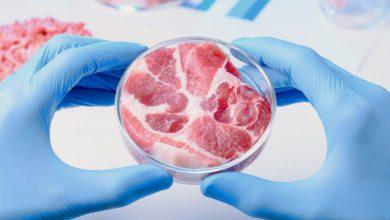 Photo of مجوز فروش گوشت های آزمایشگاهی برای اولین بار در جهان