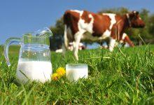 Photo of تولید شیر گاو بدون دخالت گاو