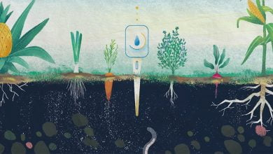 Photo of راهکار های کشاورزی برای تامین غذا در آینده چیست؟