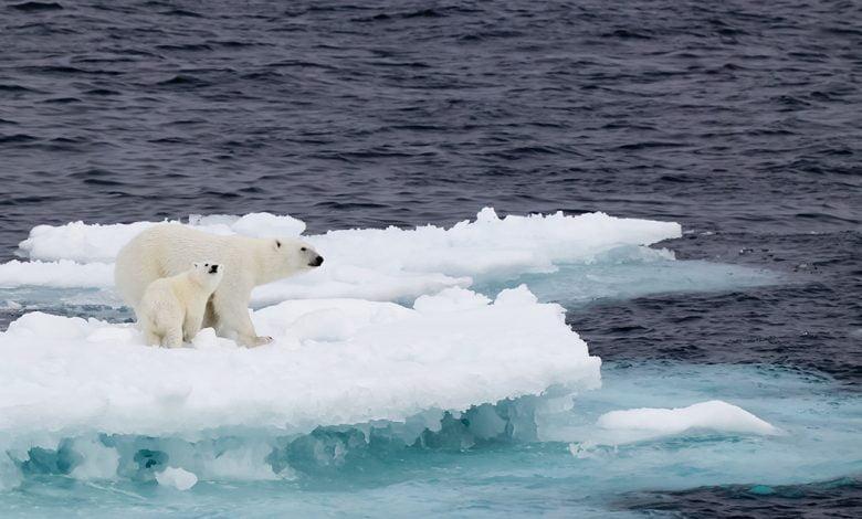 Photo of اثر دما بر افزایش تولید دی اکسید کربن