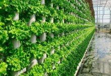 Photo of کشاورزی عمودی چیست؟