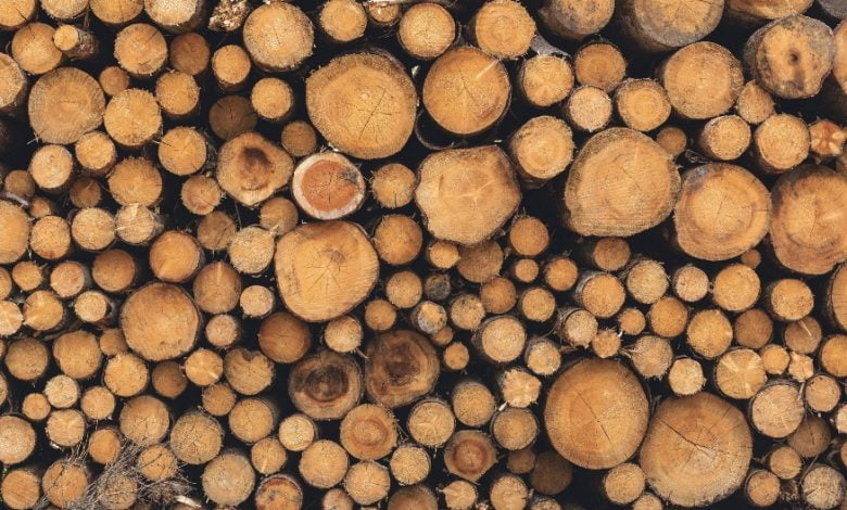 Photo of چوب آزمایشگاهی، نجات بخش زمین
